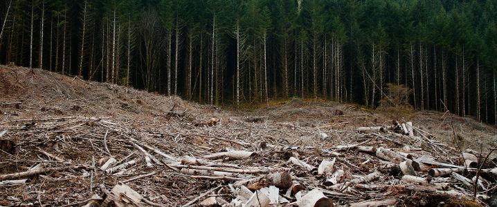 loss of natural resources
