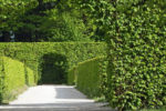 Hedge Living Fence