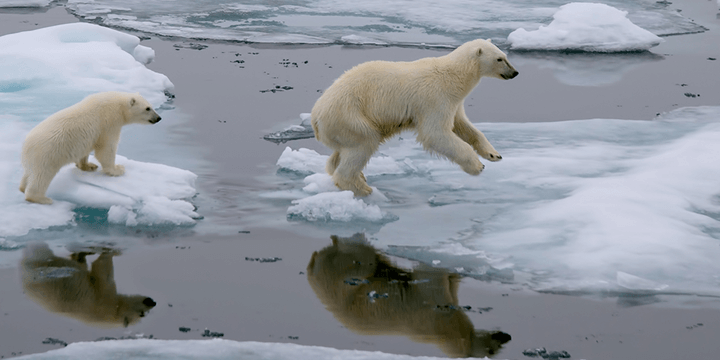 Polarbears720x360