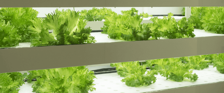 leafy_greens2