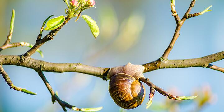 Snail on a tree branch at a snail farm