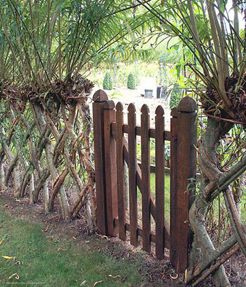 Living Fence with Gate