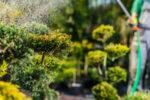 Maintaining Plants