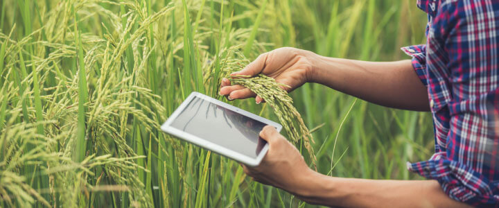 Artificial Intelligence in Agriculture